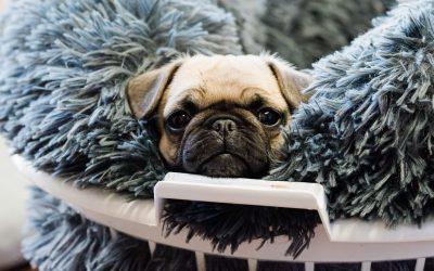 Puppy Preschool Essentials