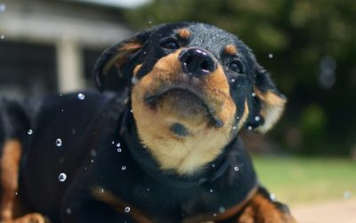 5 Ways to Keep Your Pet Cool This Summer